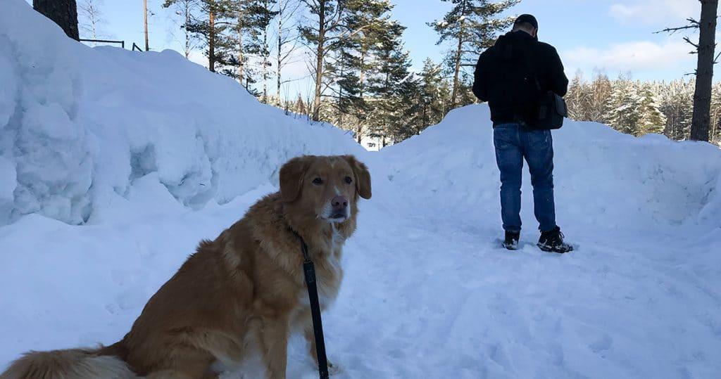 Familien på tur i snøen, vinteren