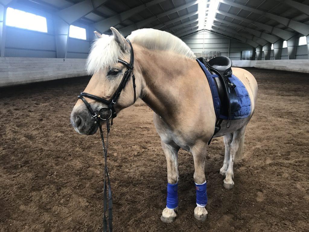 Livet med hest smiler