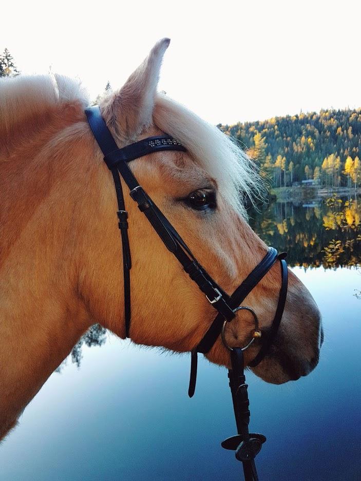 Livet med fjordhest