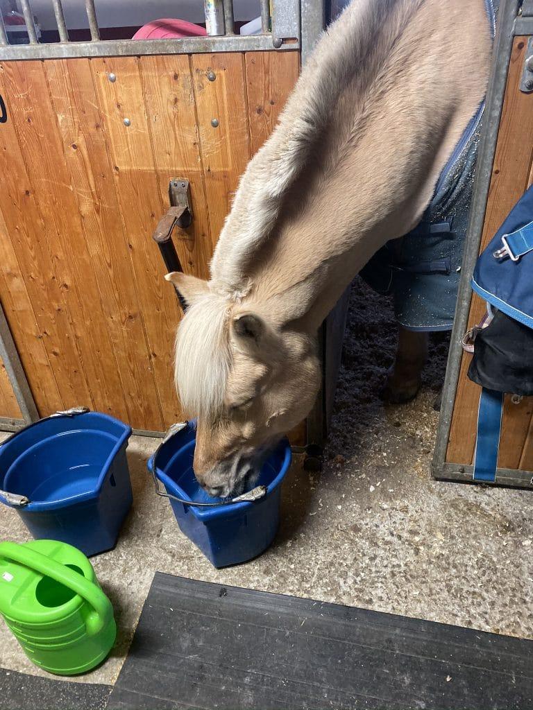 Tørst hest