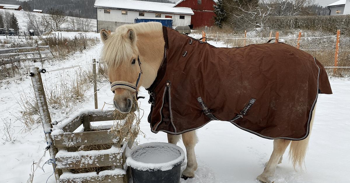 Sprekere hest