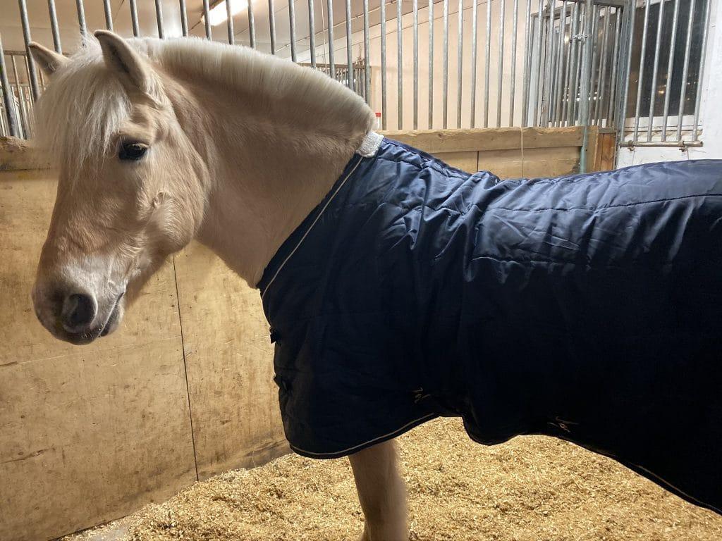 Mentalitettrening godt for hest og menneske