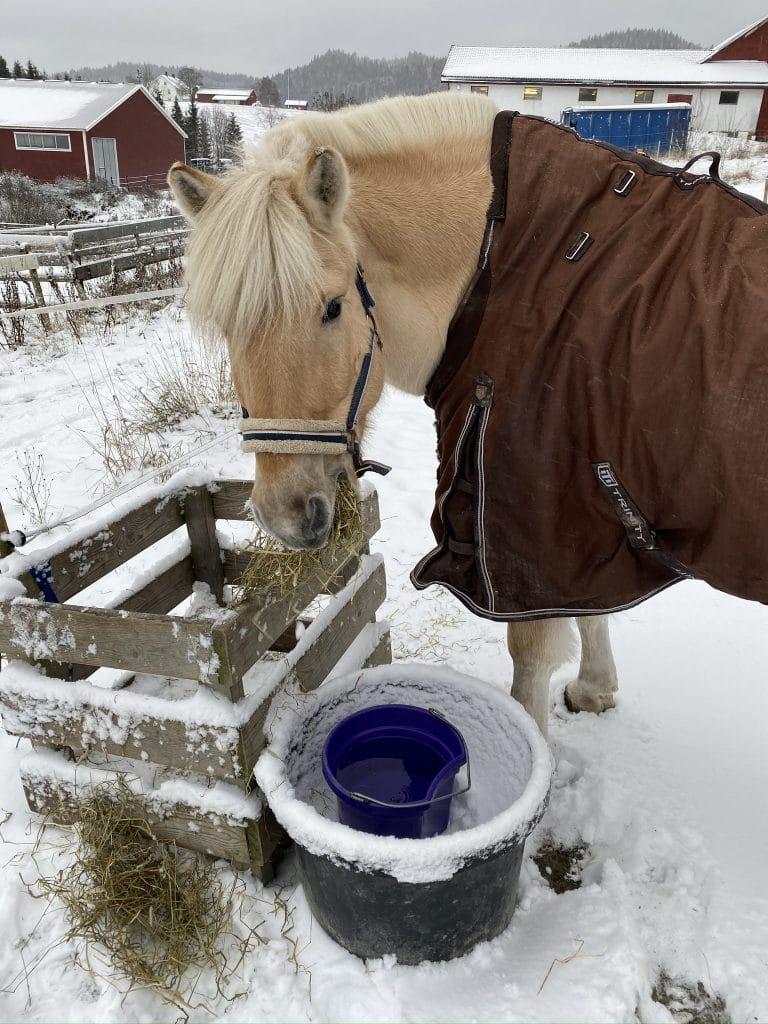 Vinter og Kvikk