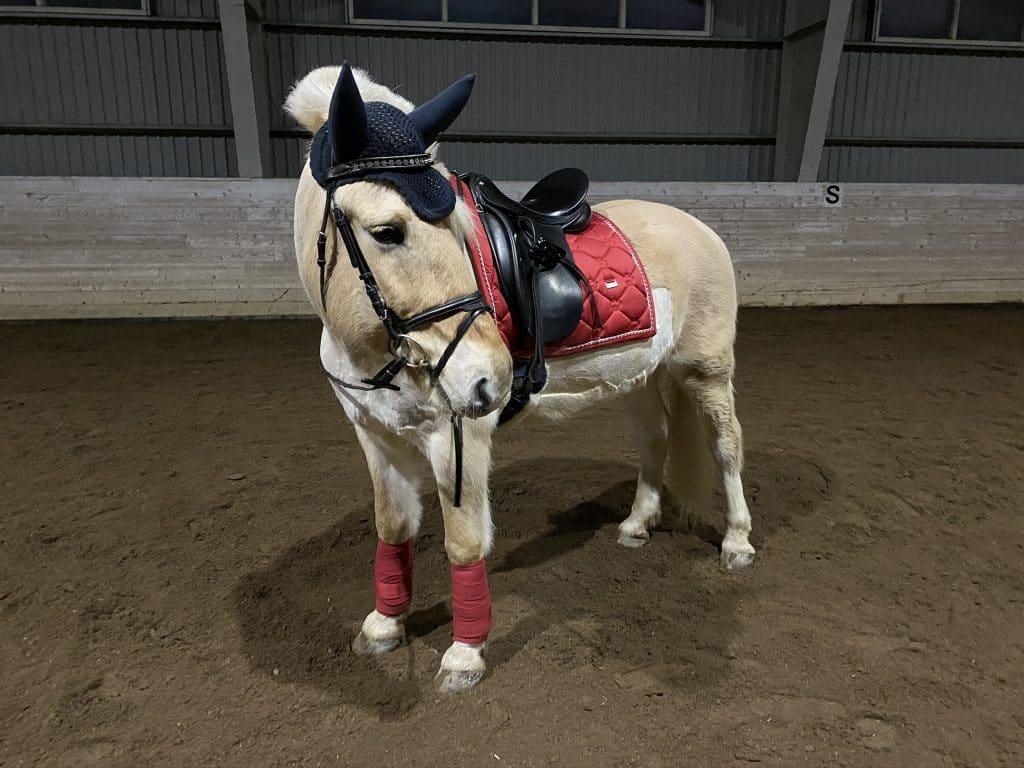 PS of Sweden rød - hest