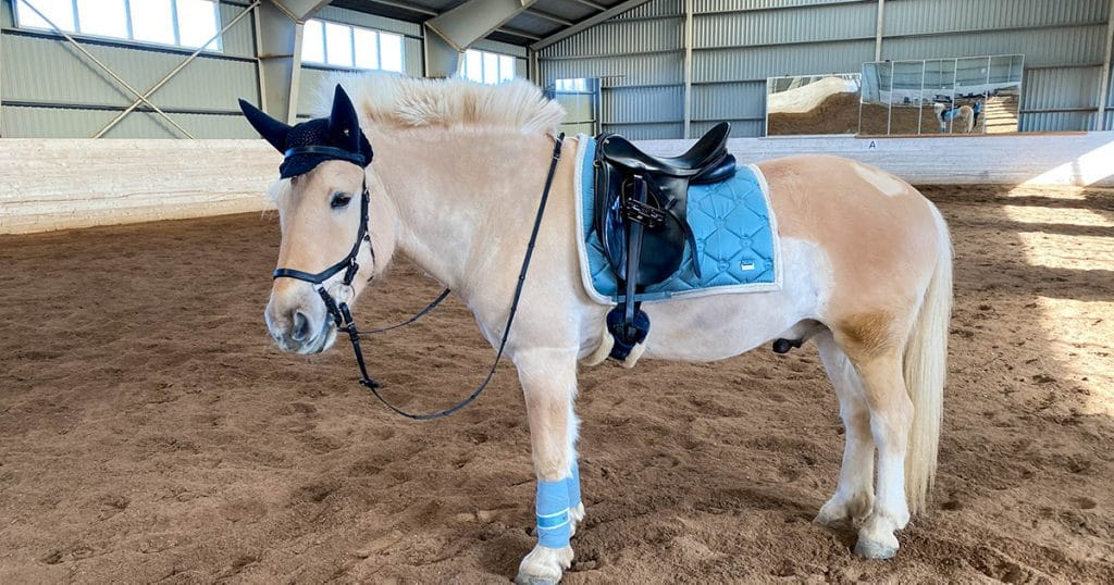 PS of Sweden blå - hest