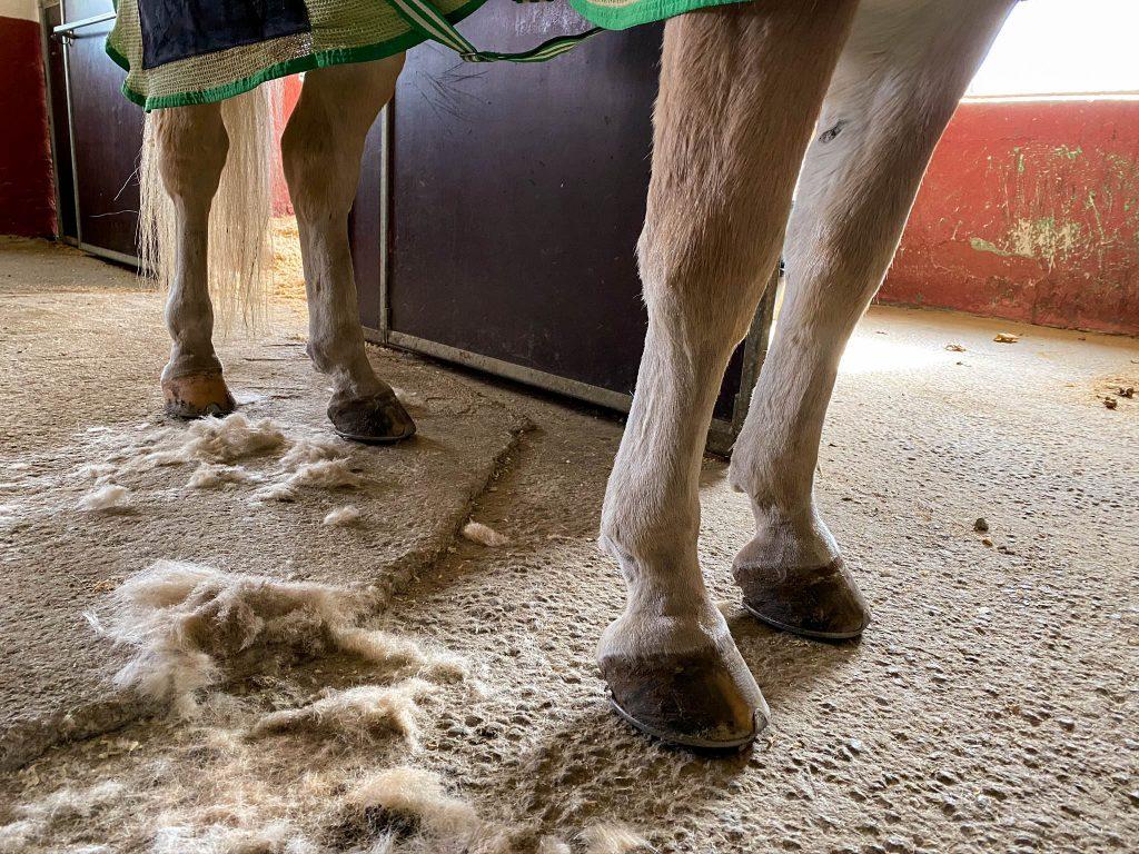 Mye hår etter å ha barbert en hest, fri