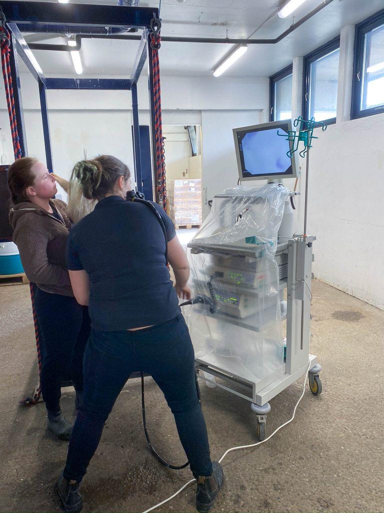 Når dyr blir syke - Endoskopi på hest