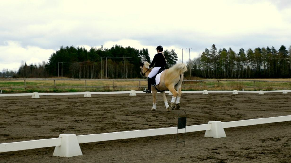 Hvorfor bukker hesten