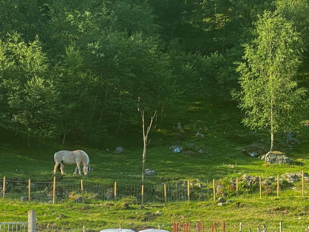 Fjording i Vøringsfoss