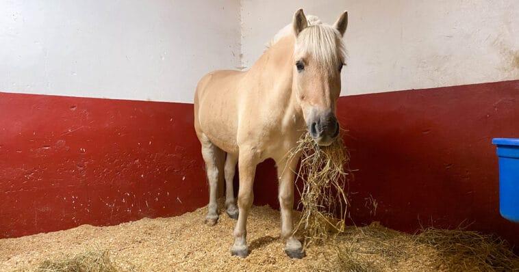 Grovfôr hest