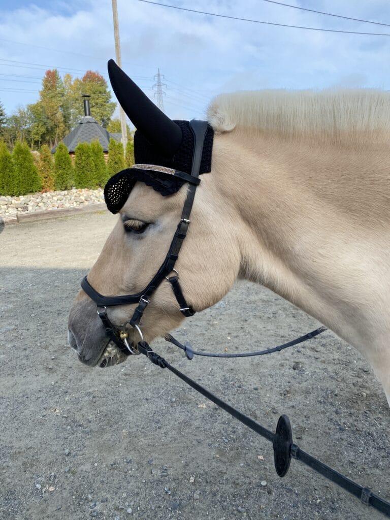 Anbefales ikke - syk hest på stevne