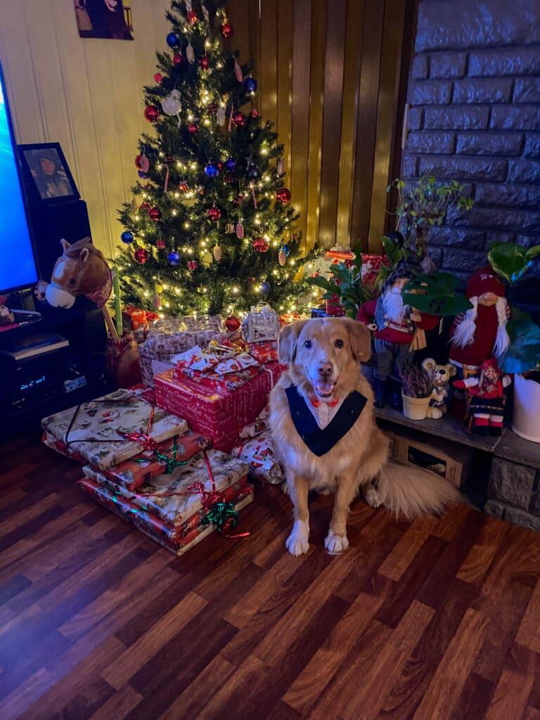 En annerledes jul - fineste Toller