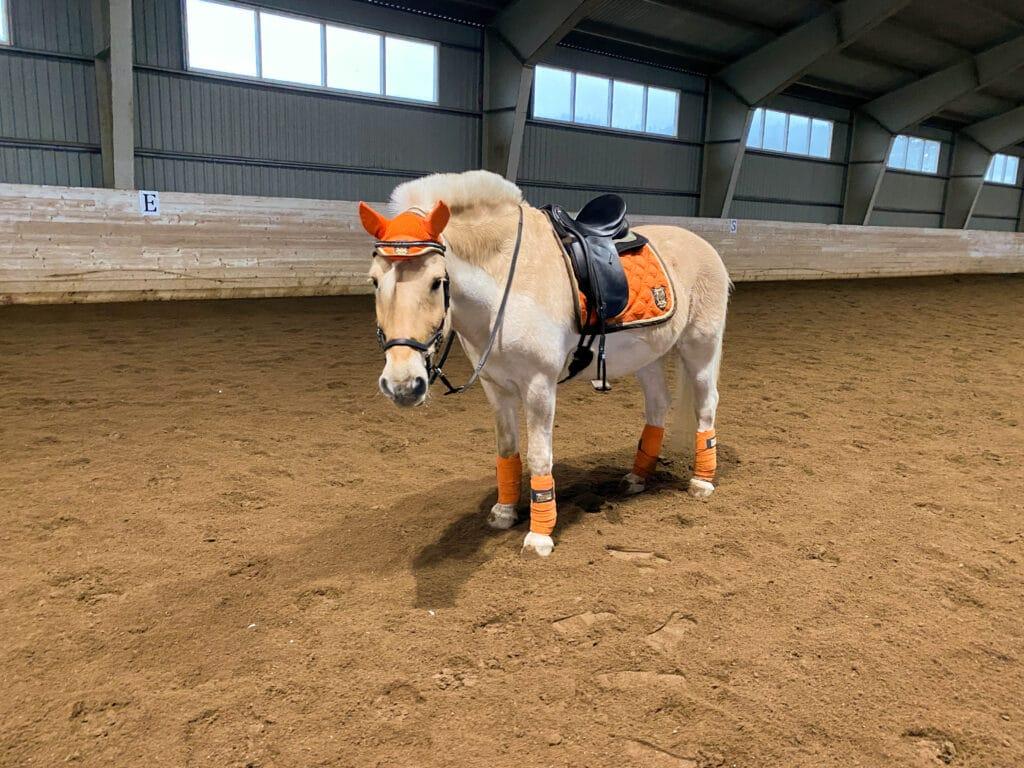 Verdens beste hest - dagens outfit