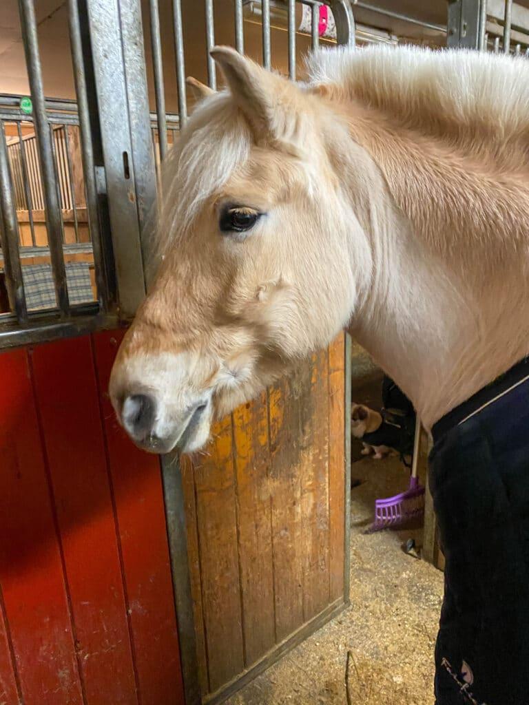 Verdens beste hest - fjordhest