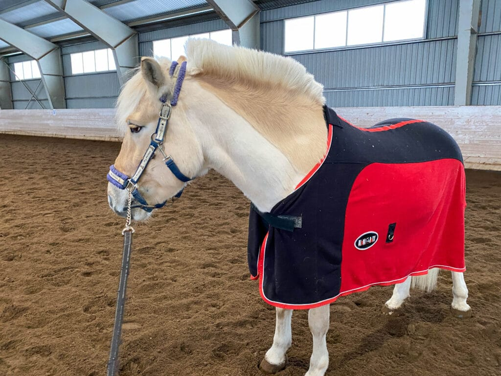 Trimme hest før nyttårsfeiring