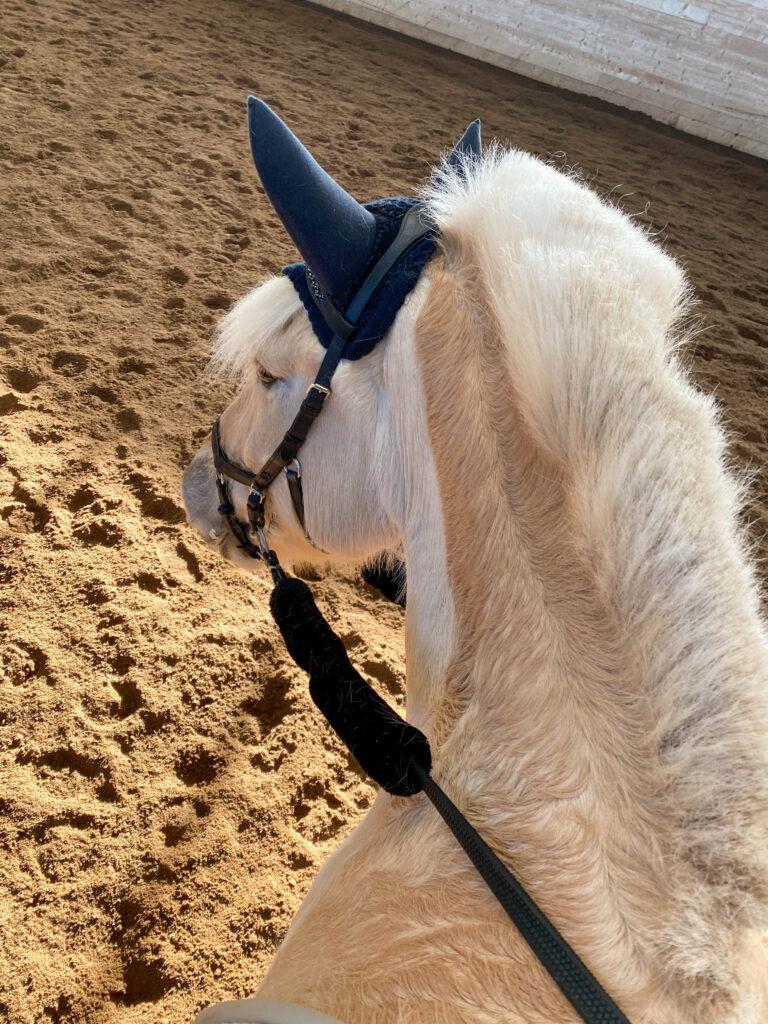Flink hest, ri for instruktør