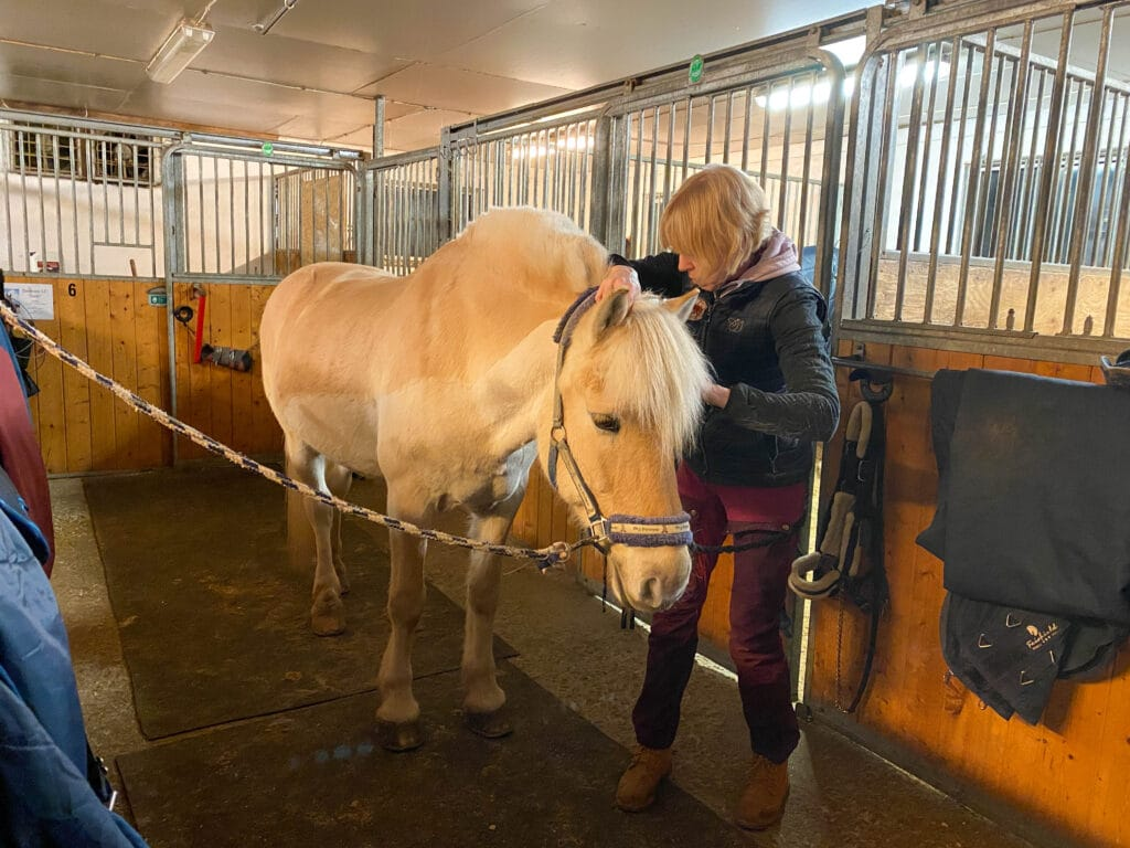 Osteopat til hest