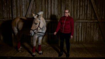 Hest er tidskrevende