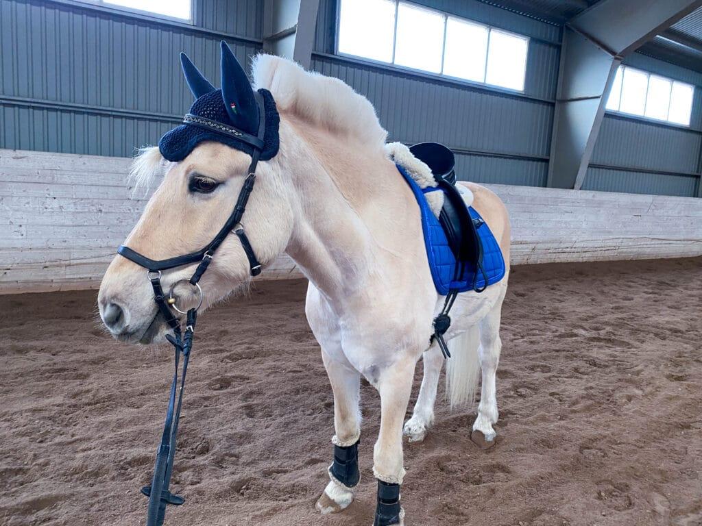 Treningsprogram flink hest