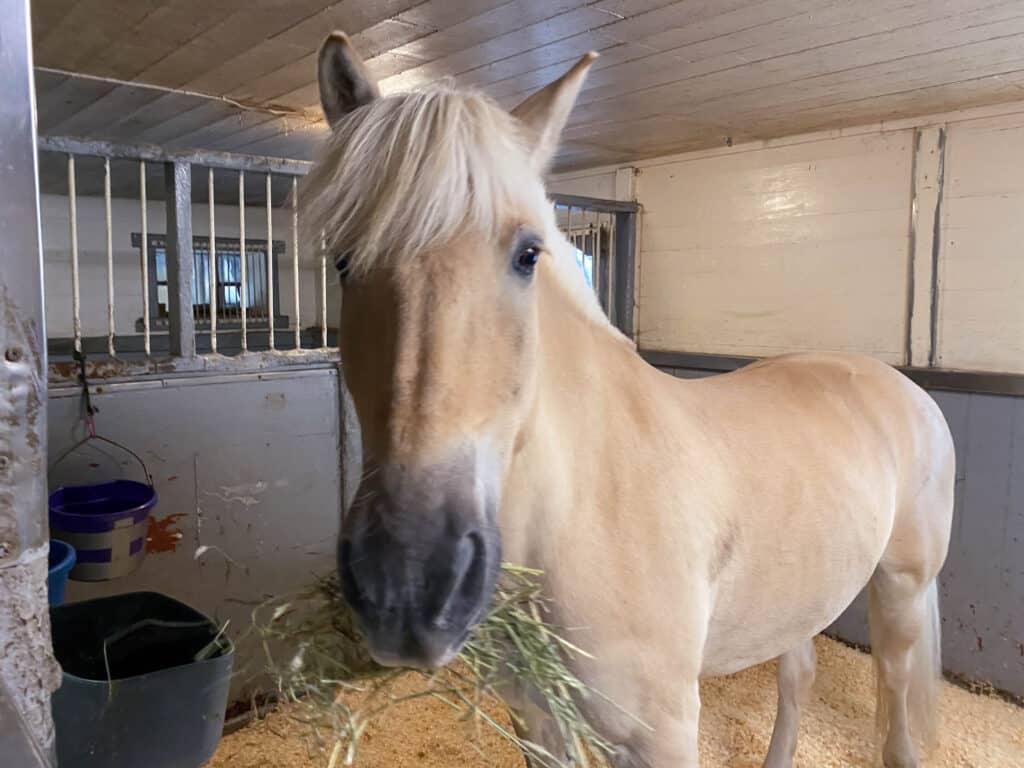 Fornøyd hest på ferie