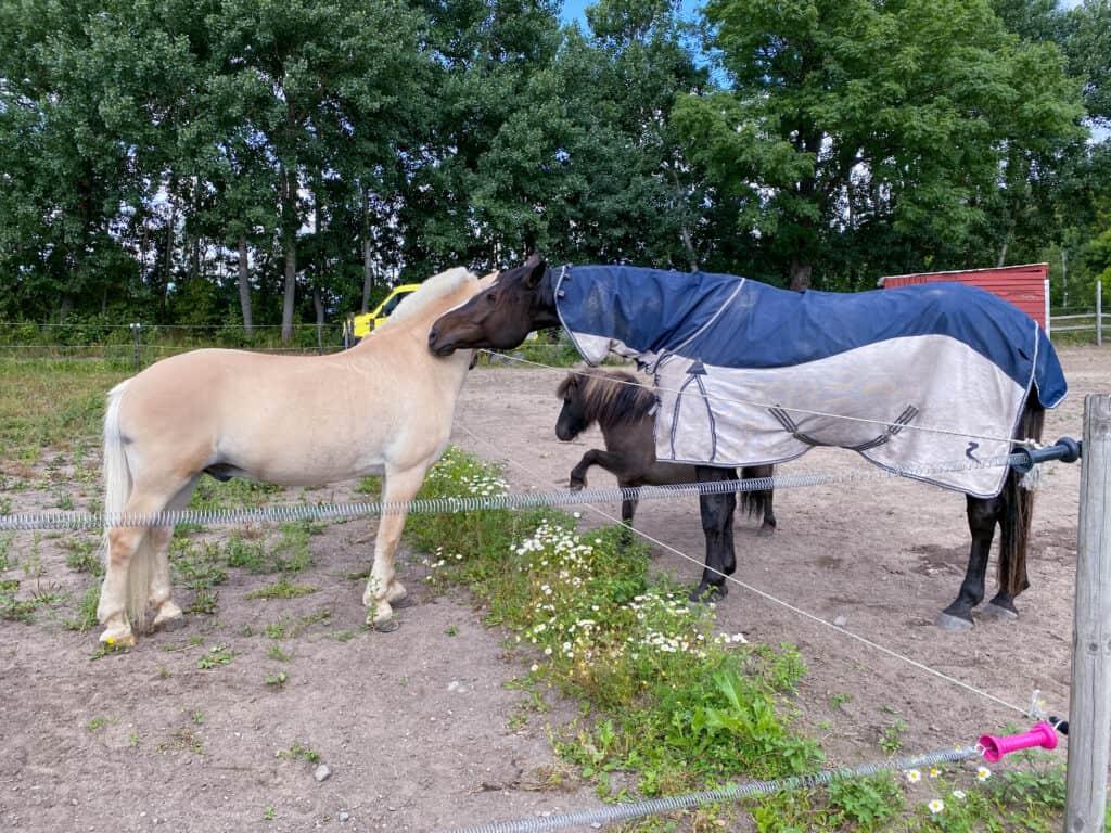 Hest med på familieferie