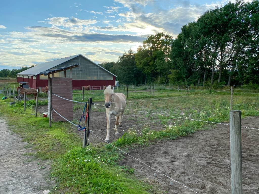 Hest på familieferie
