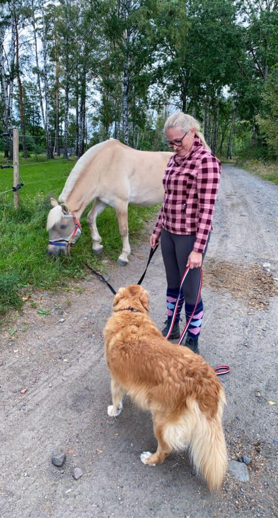 Kveldstur med hest og hund