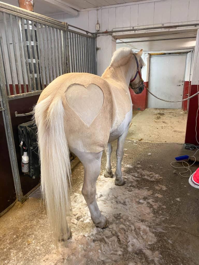 Nybarbert hest med hjerte på rompa